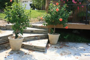 Steps to Patio